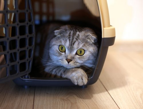 Simple Tips for a Stress-Free Veterinary Visit With Your Pet